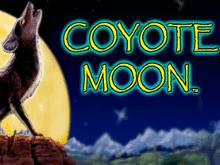 Животный мир наполненный призами и бонусами - Coyote Moon